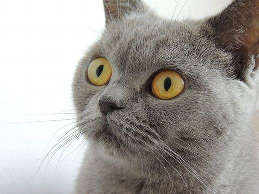 cat-179842_640.jpg