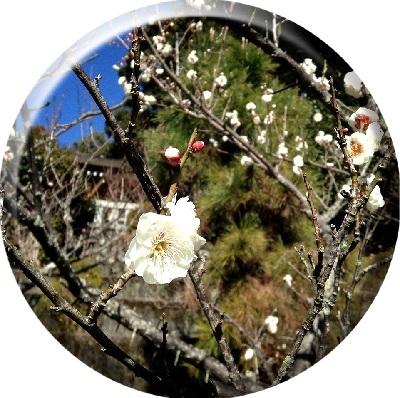 お花見 (1)