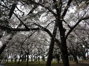 浜寺公園 (2)