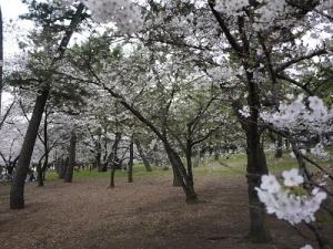 浜寺公園 (4)