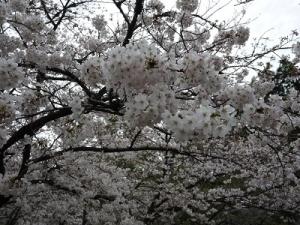 浜寺公園 (5)