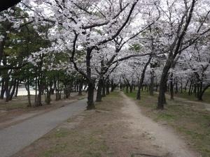 浜寺公園 (6)