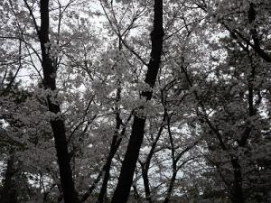 浜寺公園 (7)