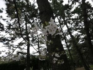 浜寺公園 (8)