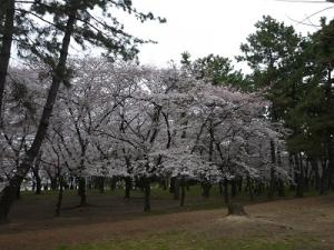 浜寺公園 (9)