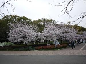 長居公園 (3)