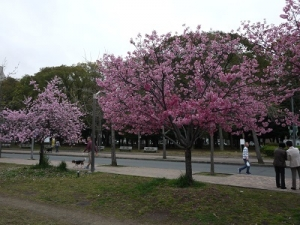 長居公園 (4)