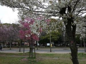 長居公園 (5)
