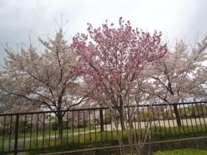 長居公園412 (14)