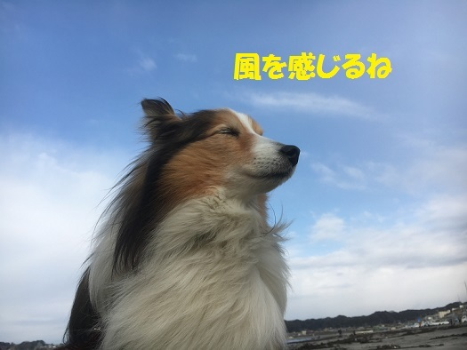 2017032106211287e.jpg