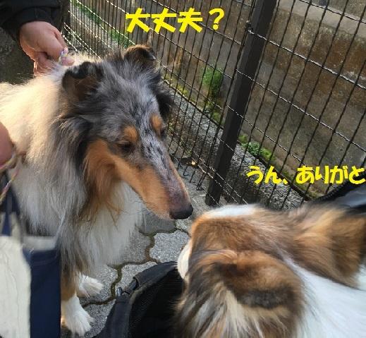 シリちゃん2