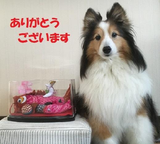 のあちゃん5