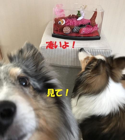 のあちゃん3