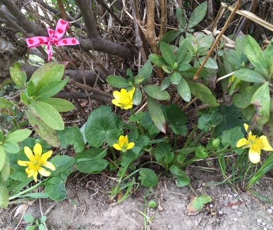 spring2017124.jpg