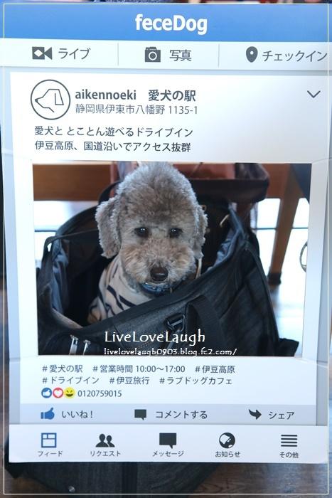 IMG_9752あいけんのえき4