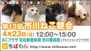 ichikawaneko13_320x1801.jpg