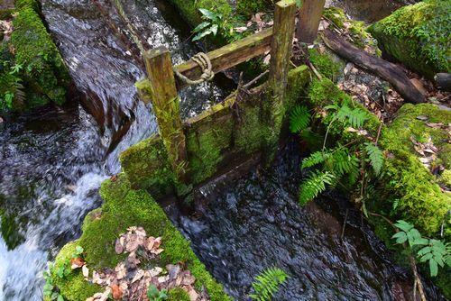 290319 水が流れる西原を散歩8