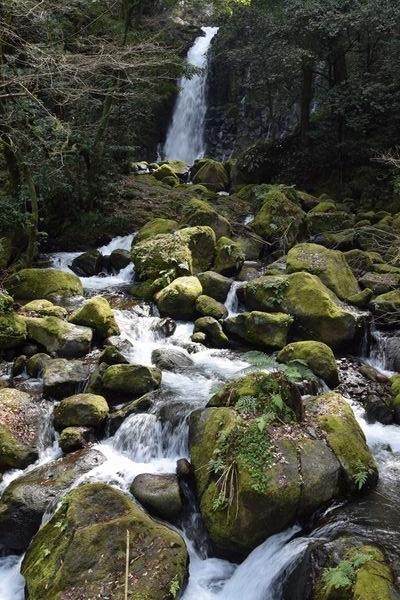 290319 水が流れる西原を散歩16