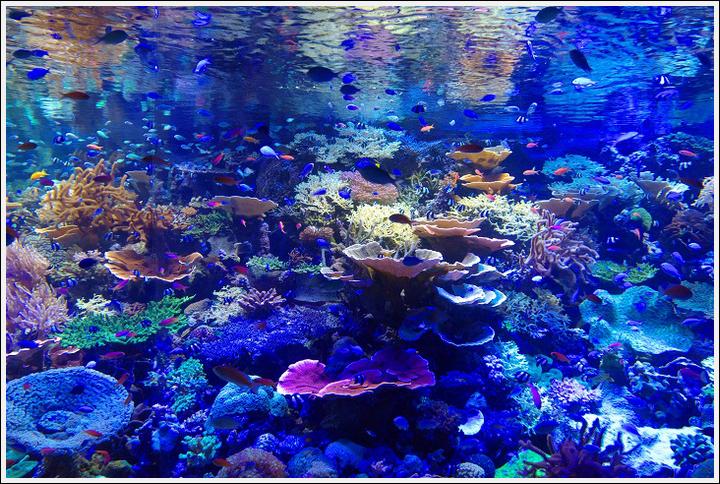 2017年4月18日 名古屋港水族館 (3)