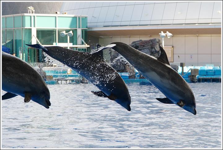 2017年4月18日 名古屋港水族館 (5)