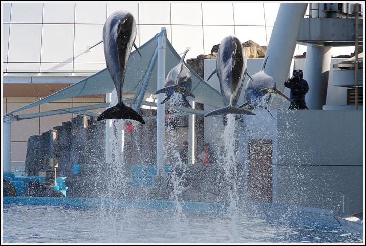 2017年4月18日 名古屋港水族館 (6)