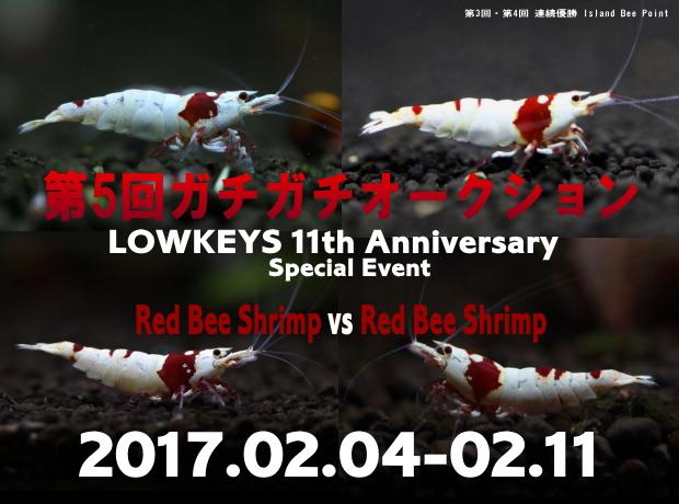 gachigachi55_20170211105516323.jpg