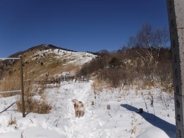 鷲ヶ峰 2017-1-28 005