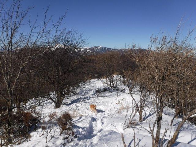 鷲ヶ峰 2017-1-28 060