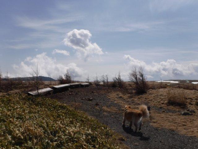 美ヶ原高原2017.4.22 070