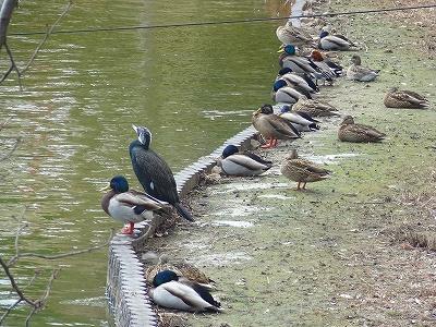 南公園の鳥