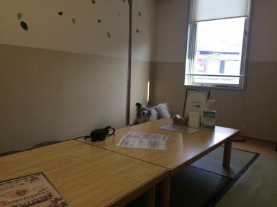 2017しろいぬカフェ4