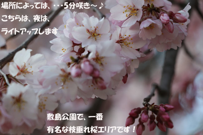 0A1A0300-876543456-9876543.jpg