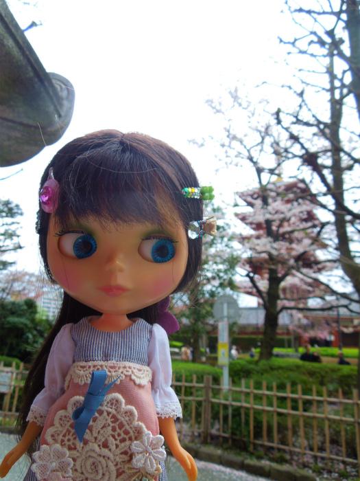 2016浅草サクラ17