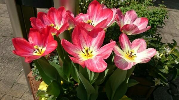 花粉症のスピリチュアルな理由