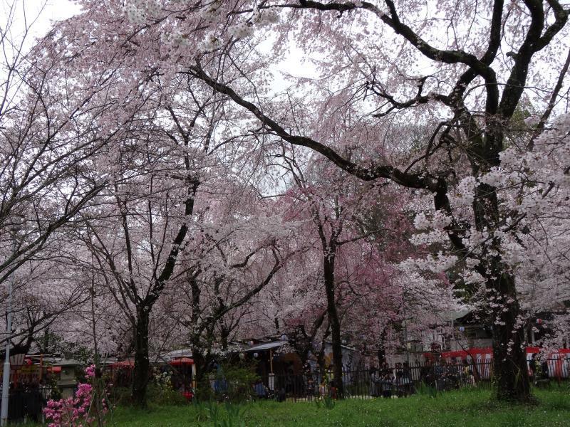 平野神社9