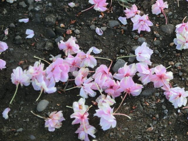 花びらならぬお花のじゅうたん