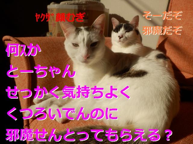 P2186001.jpg