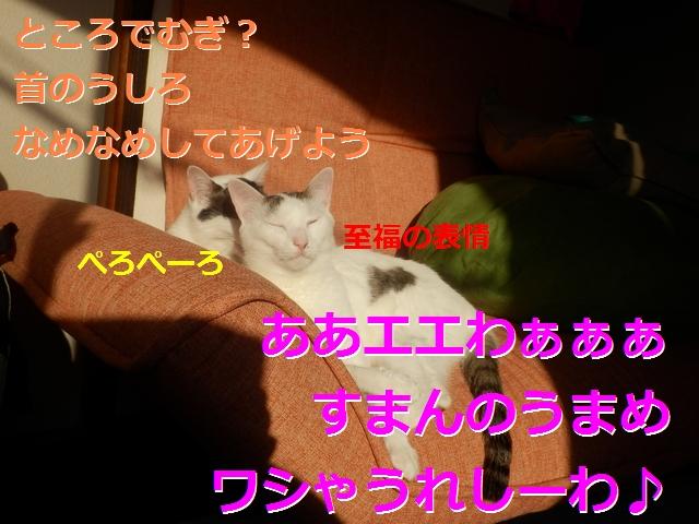 P2186005.jpg