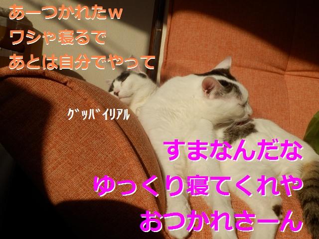 P2186009.jpg