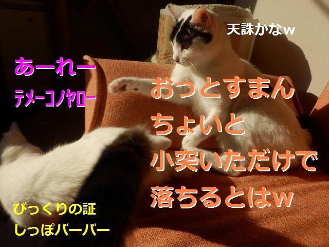 P2186016.jpg