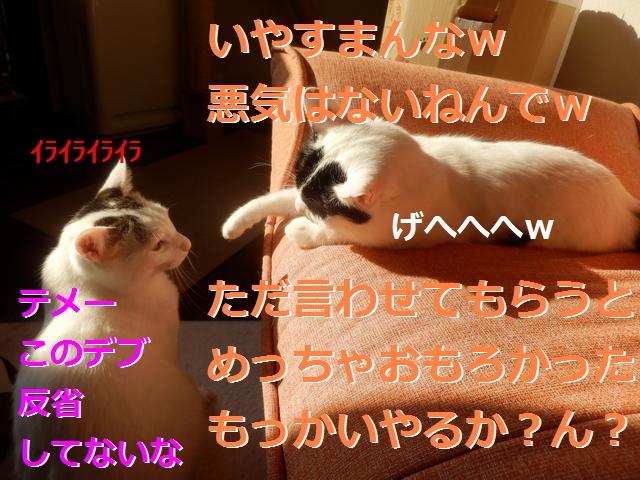 P2186021.jpg