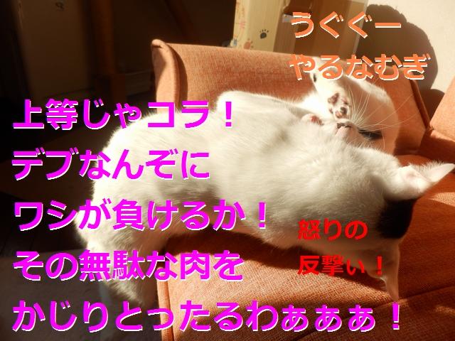 P2186022.jpg