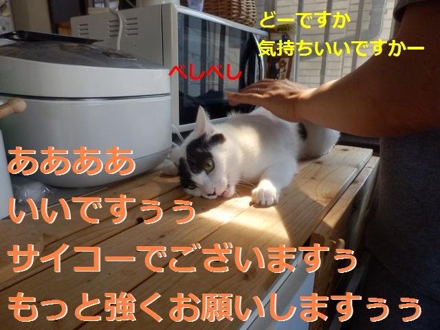 P4236351.jpg