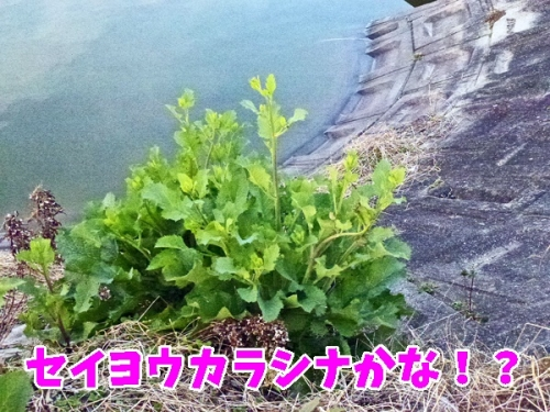 なんの草花