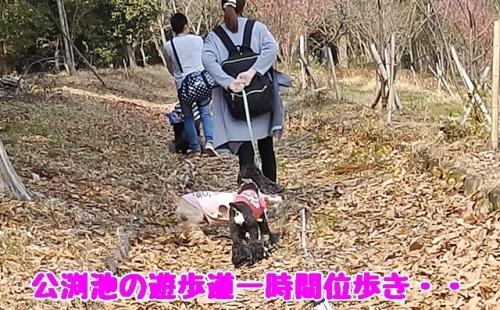 公渕遊歩道歩く
