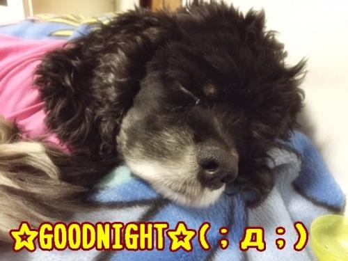 おやすみなさいでつ