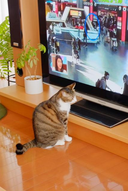 TV4DSCF2051.jpg
