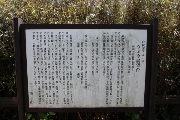 17城ヶ島4