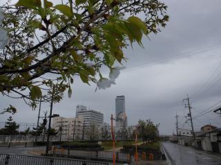 雨桜_convert_20170411211643