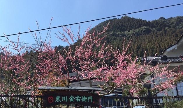 梅の花に囲まれて